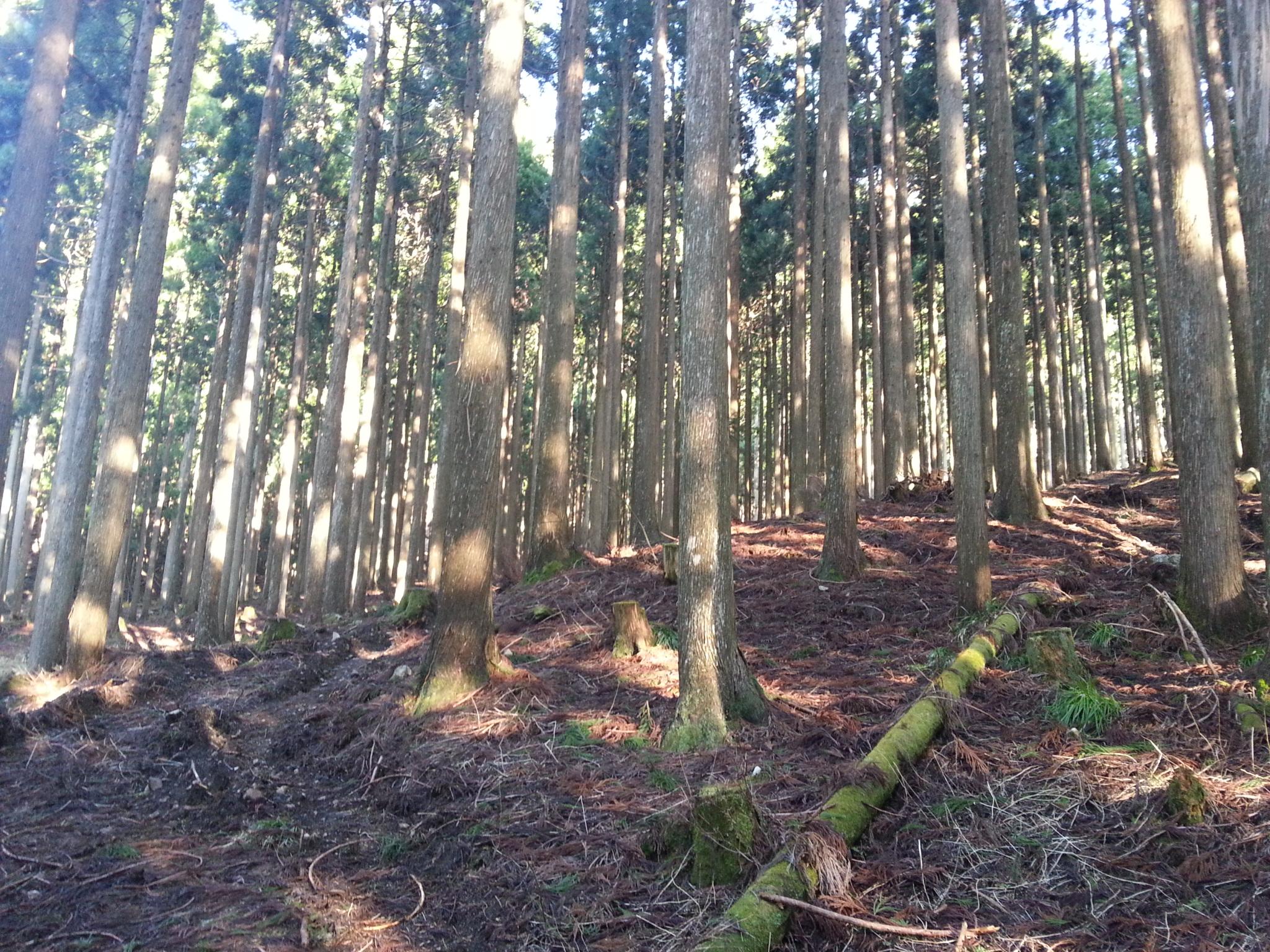 「木材・材木」のススメ